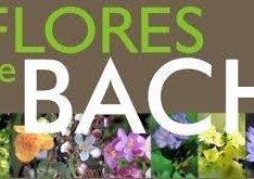 Las flores de Bach para animales ¿que son y para que sirven?