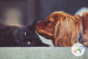 arcoiris pets foto gato negro y perro cocker canela 600x400