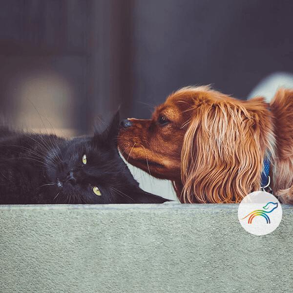 arcoiris pets foto gato negro y perro cocker canela 600x600