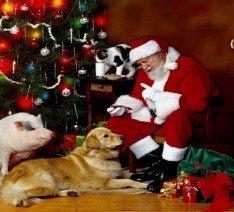 La Navidad, el terror de los cachorros (Los animales no son juguetes)