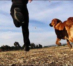 Hacer deporte con mi perro ¿La última moda?