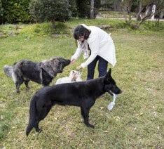 El Adiestramiento con motivadores: como premiar adecuadamente al perro