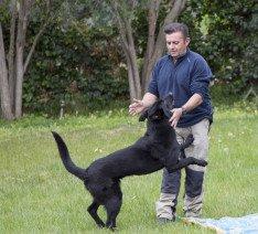 Adiestrador canino en Valencia tu adiestrador a domicilio
