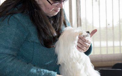Consejos de Higiene Básica en Perros. #04 Cepillado del pelo largo en perros