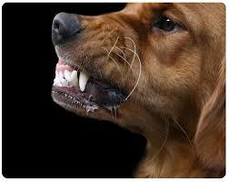 http://dogguaubilbao.blogspot.com.es/2013/01/tecnicas-de-modificacion-del.html