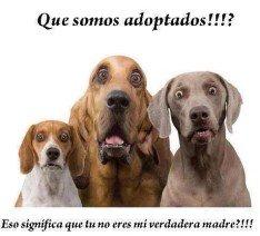 Somos perros adoptados 234x212