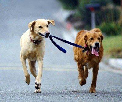 http://www.taringa.net/posts/mascotas/16267869/Porque-vivimos-mas-que-los-perros.html