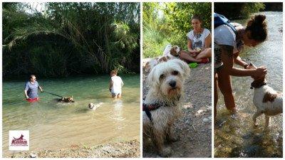 20160917 Excursion Villamarxante - fotos caninas