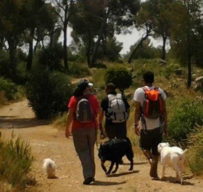 Los paseos con un perro: Entre el cielo y el infierno