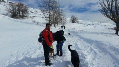 salida a la nieve con los perros enero 2017 #1