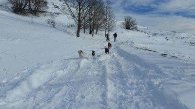 salida a la nieve con los perros enero 2017 #2