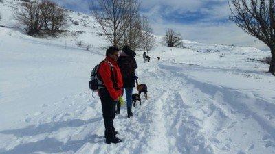 salida a la nieve con los perros enero 2017 #5