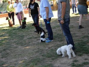 KOIRA Escuela de Adiestramiento Canino en Valencia