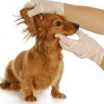 video consejos higiene basica en perros #1 limpieza de ojos