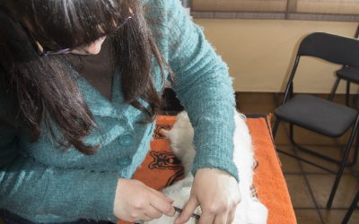 Consejos de Higiene Básica en Perros. #06 Entrenar la manipulación del perro