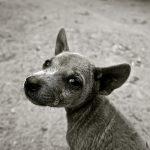 #AnimalesNOsonCosas perro abandonado