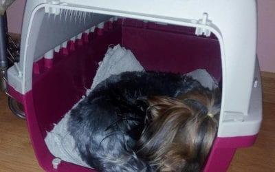 Consejos Adiestramiento Canino | #03 Cómo enseñar a mi perro a usar el transportin