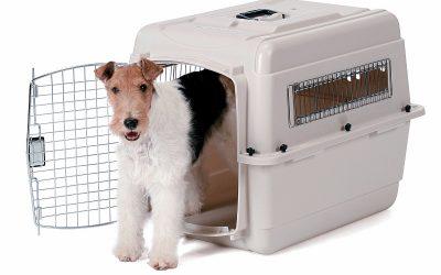 Consejos Adiestramiento Canino | #01 El Transportín