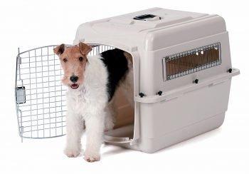 transportín rígido perros adiestramiento canino consejos 350x244