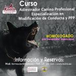 Cartel Curso Adiestrador Canino Profesional Homologado KOIRA 800x800