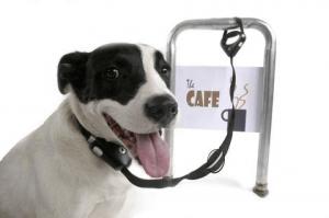 Safe Spot un collar antirrobo para perros 480x319