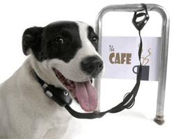 Safe Spot collar antirrobo perros 200x250