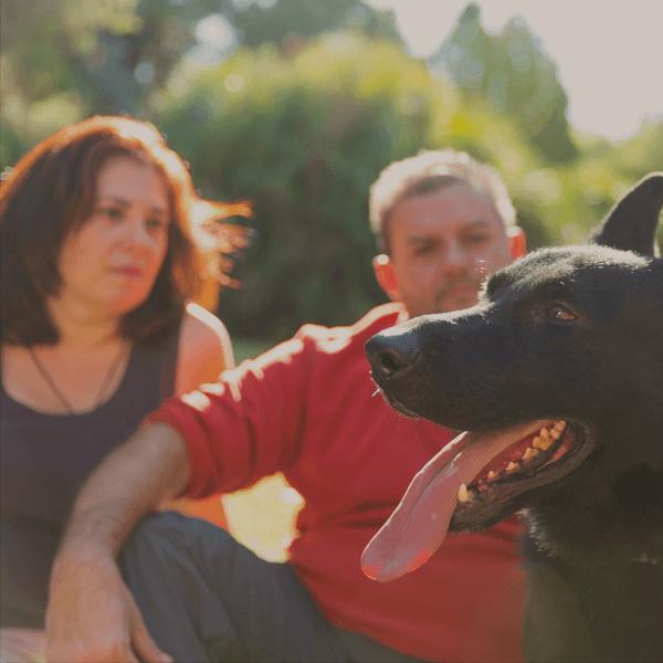 Adiestradores Caninos Profesionales en Valencia - KOIRA Adiestramiento Canino