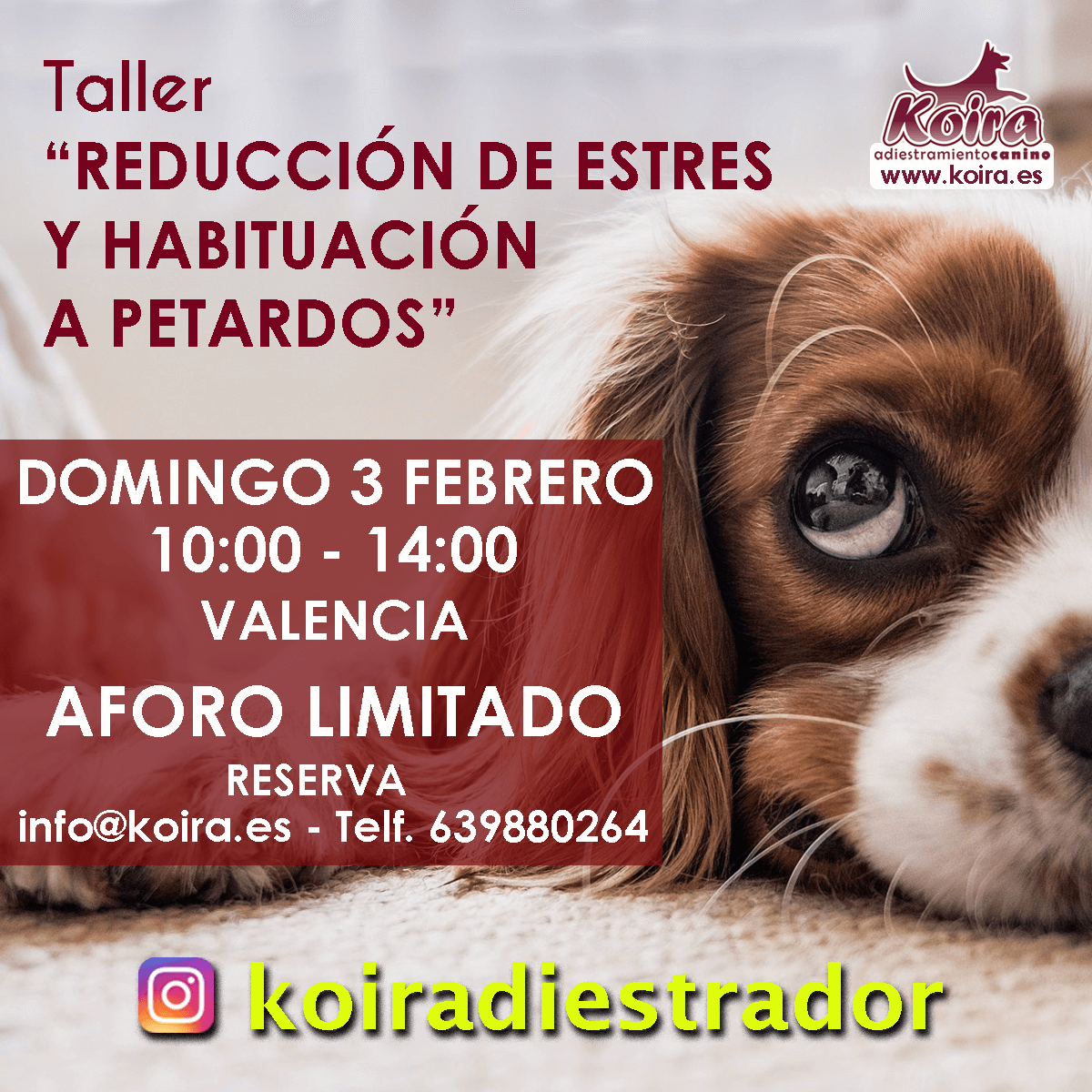 20190203 Taller reduccion de Estres y habituacion a petardos instagram