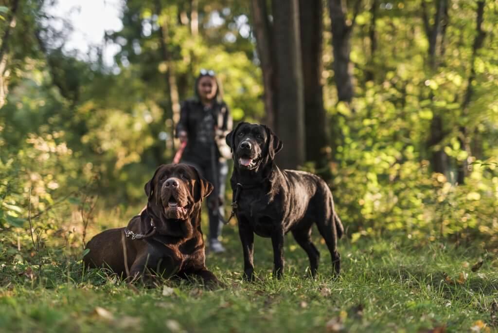 Perros paseando por campo con propopietaria