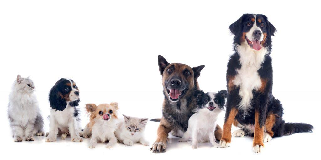 Cabecera directorio de profesionales de animales de compañía, veterinarios, peluquerias y tiendas