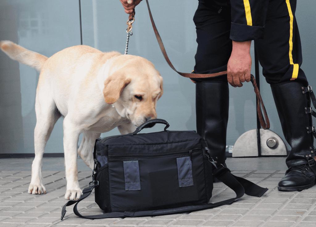 Adiestradores Caninos profesionales con perros detectores