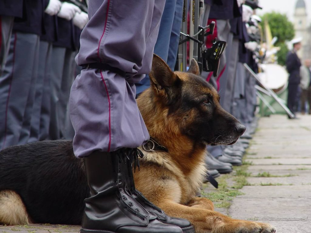 Quieres ser Adiestrador Canino? Aprende con nosotros y dedicate a tu sueño