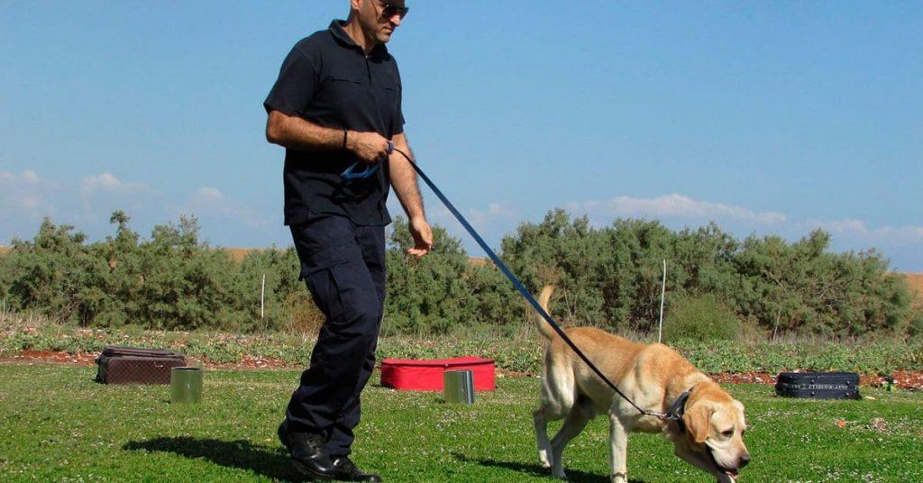 curso adiestrador canino valencia