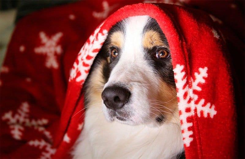 consejos perro en navidad