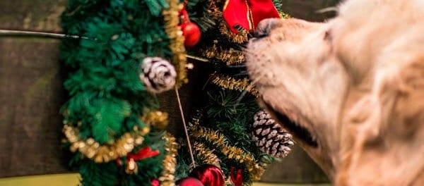 decoración-perros en navidad