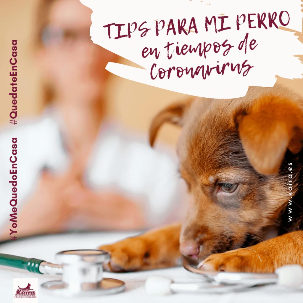tips para mi perro en tiempos de coronavirus