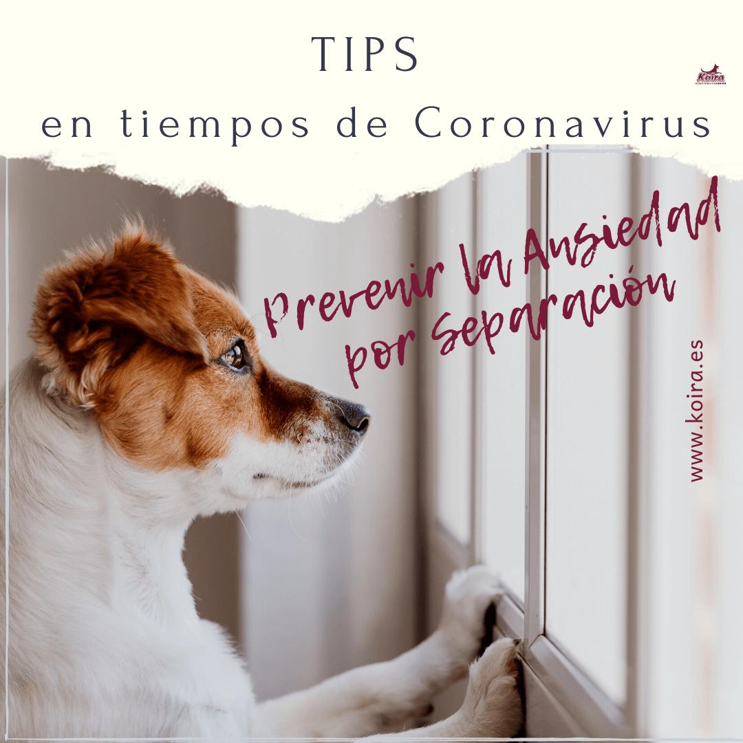 TIPS ansiedad por separacion en perros