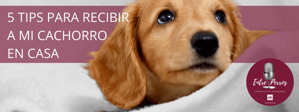 20200620 5 consejos para recibir a mi cachorro en casa