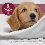 5 Cosas para preparar la llegada de mi primer cachorro