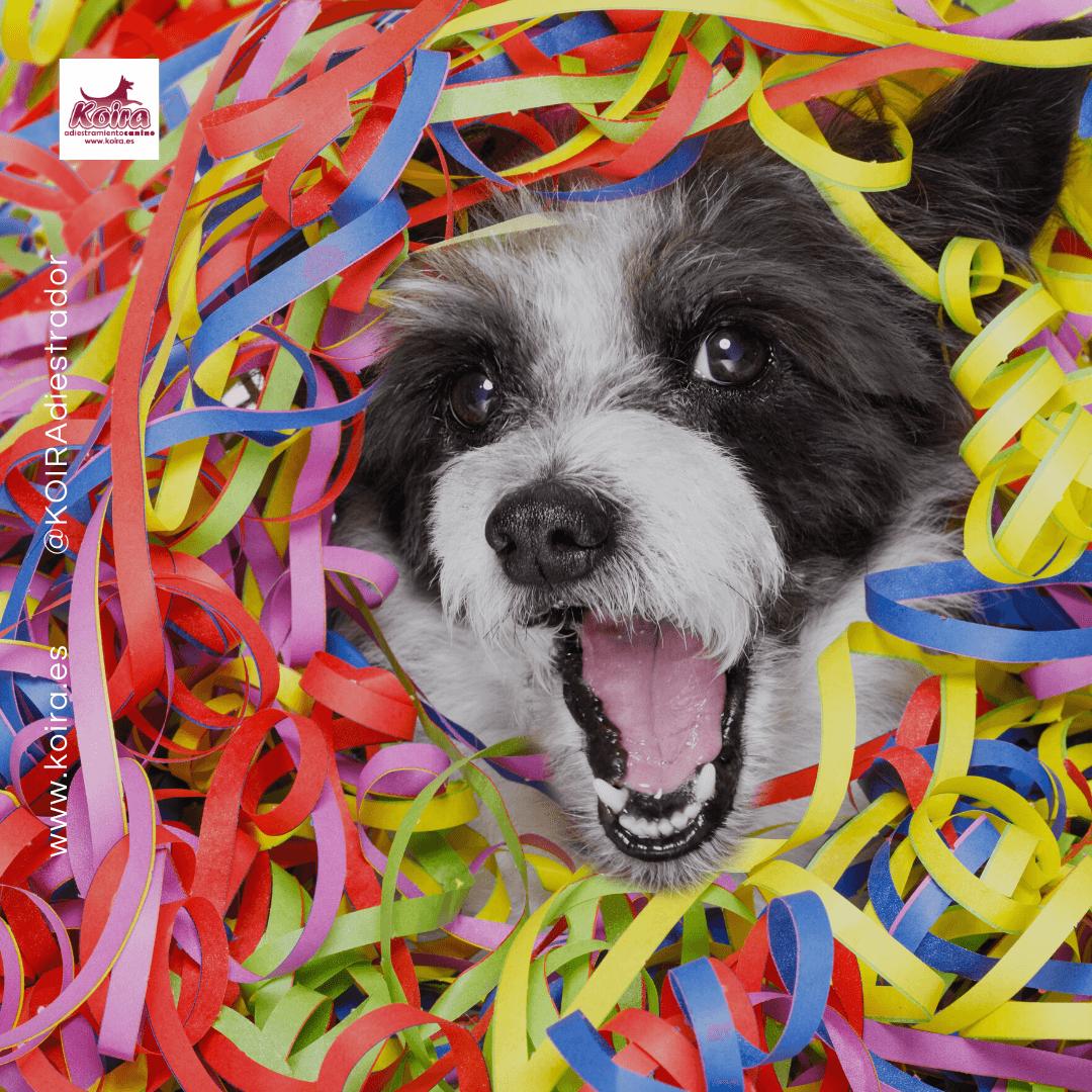 Doggie Party Imagen destacada de Fiesta Canina con confeti julio 2020