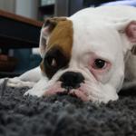 ¿Tiene mi perro sindrome postvacacional?