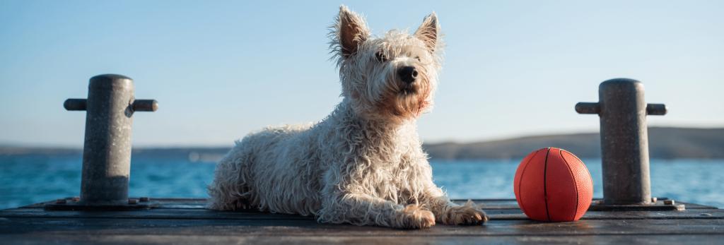 perro en la plaza disfrutando de la pelota el mar y las vacaciones