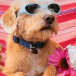 perro en hamaca disfrutando de las vacaciones
