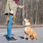 Adiestrador canino con ppp american staffordshire obediencia canina