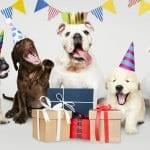 Regalo perros fiesta de perros doggie party tarjeta regalo