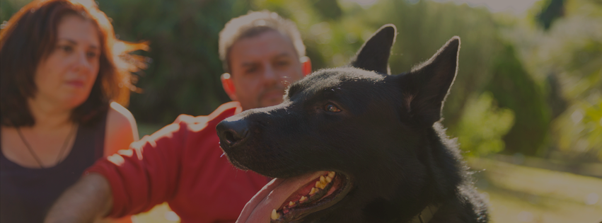 Koira Adiestramiento Canino en Valencia tu adiestrador a domicilio para modificaciones de conducta