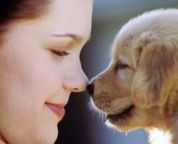 cachorro perro labrador con chica comunicacion canina KOIRA adiestramiento canino