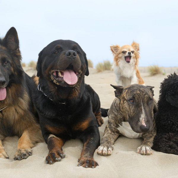 jornada socializacion perros juego perro