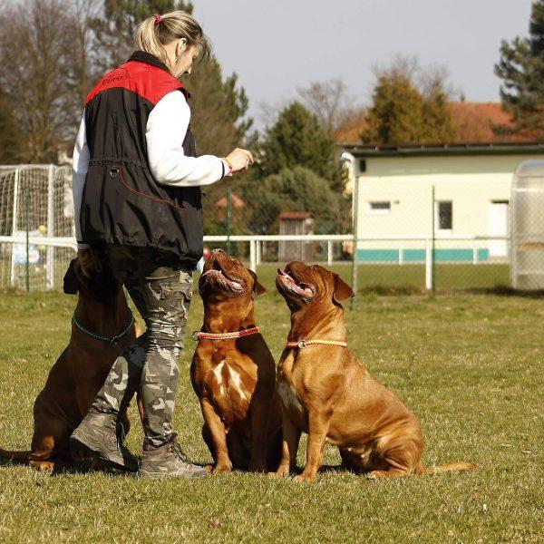 Curso Adiestrador y Educador Canino PPP y modificación de conducta