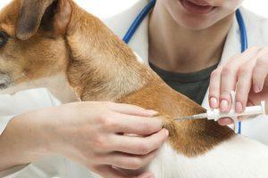 veterinario-poniendo-microchip.jpg